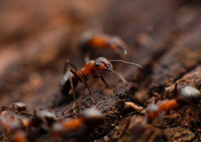 Kleine Beestjes